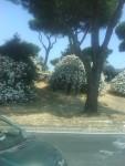 Roma's Flora