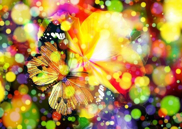 image of butterfly camouflaged by burst of color